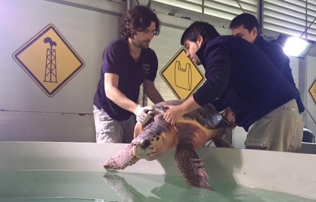 tortuga oceanográfic