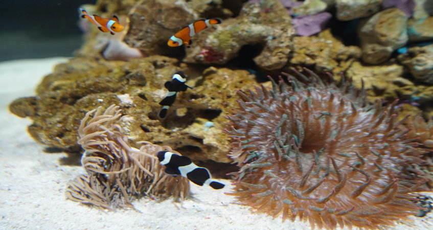 El oceanogr fic de valencia estrena un nuevo acuario for Oceanografic valencia precio 2016