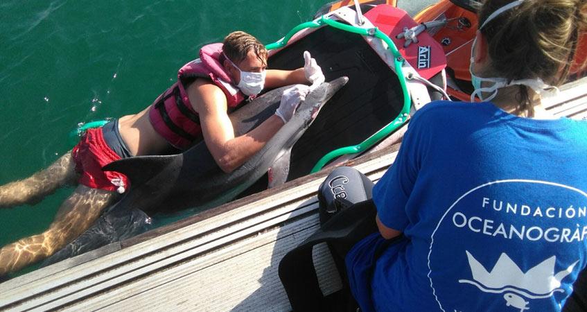 delfin varado